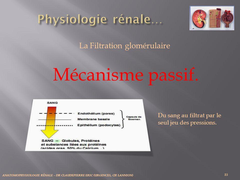 ANATOMOPHYSIOLOGIE RÉNALE – DR CLAUDEPIERRE ERIC (URGENCES, CH LANNION) 15 La Filtration glomérulaire Mécanisme passif. Du sang au filtrat par le seul