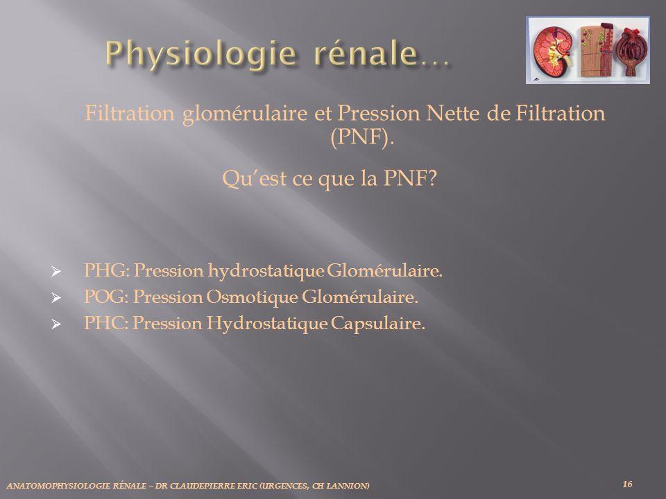 ANATOMOPHYSIOLOGIE RÉNALE – DR CLAUDEPIERRE ERIC (URGENCES, CH LANNION) 16 Filtration glomérulaire et Pression Nette de Filtration (PNF). Quest ce que