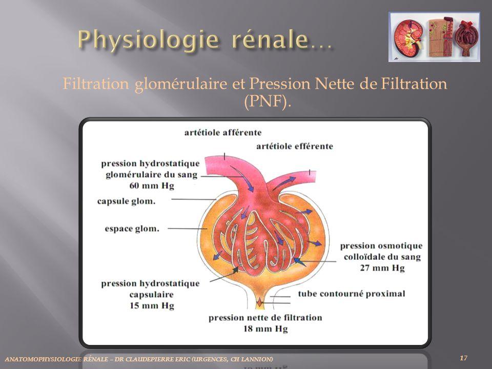 ANATOMOPHYSIOLOGIE RÉNALE – DR CLAUDEPIERRE ERIC (URGENCES, CH LANNION) 17 Filtration glomérulaire et Pression Nette de Filtration (PNF).