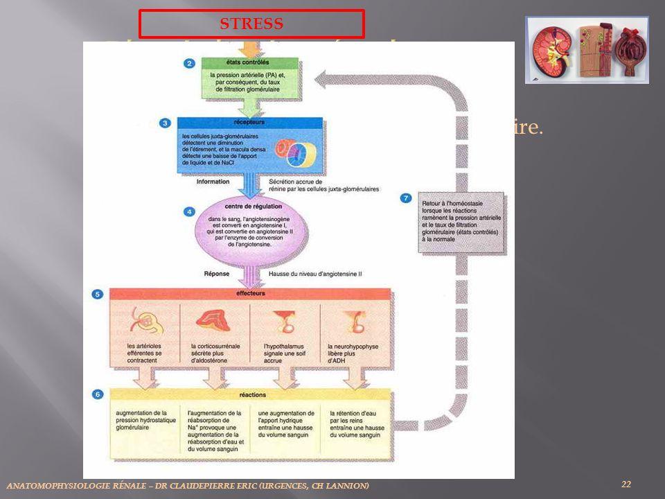 ANATOMOPHYSIOLOGIE RÉNALE – DR CLAUDEPIERRE ERIC (URGENCES, CH LANNION) 22 Régulation de la Filtration Glomérulaire. (b) Régulation HORMONALE. STRESS