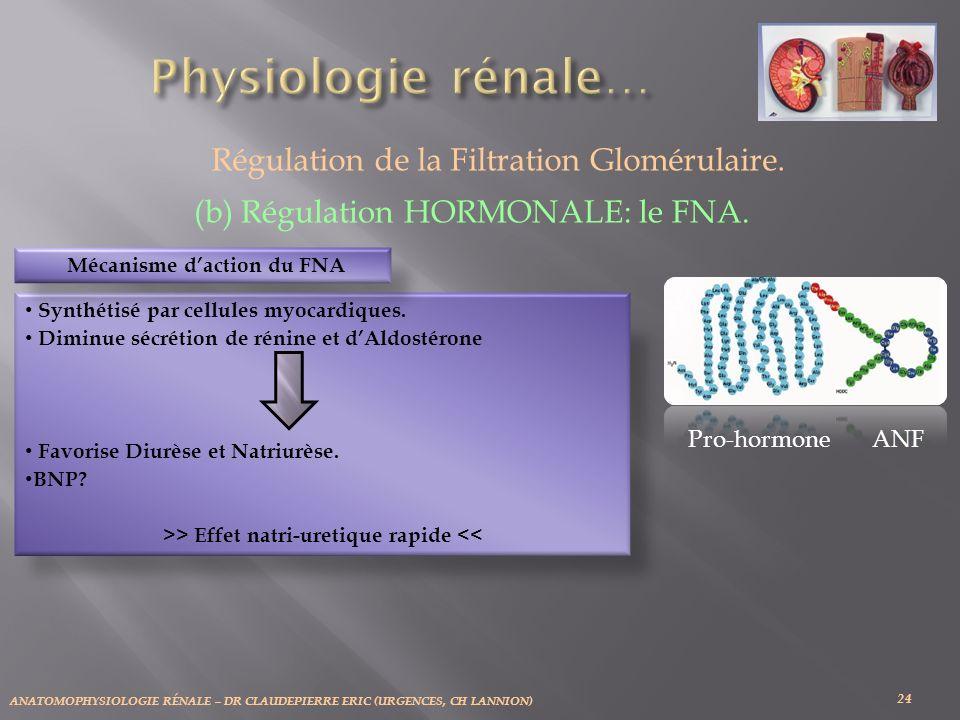 ANATOMOPHYSIOLOGIE RÉNALE – DR CLAUDEPIERRE ERIC (URGENCES, CH LANNION) 24 Régulation de la Filtration Glomérulaire. (b) Régulation HORMONALE: le FNA.