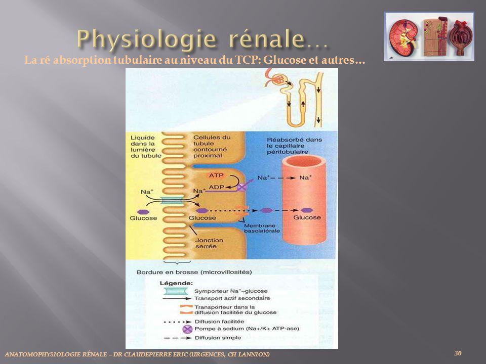 ANATOMOPHYSIOLOGIE RÉNALE – DR CLAUDEPIERRE ERIC (URGENCES, CH LANNION) 30 La ré absorption tubulaire au niveau du TCP: Glucose et autres…