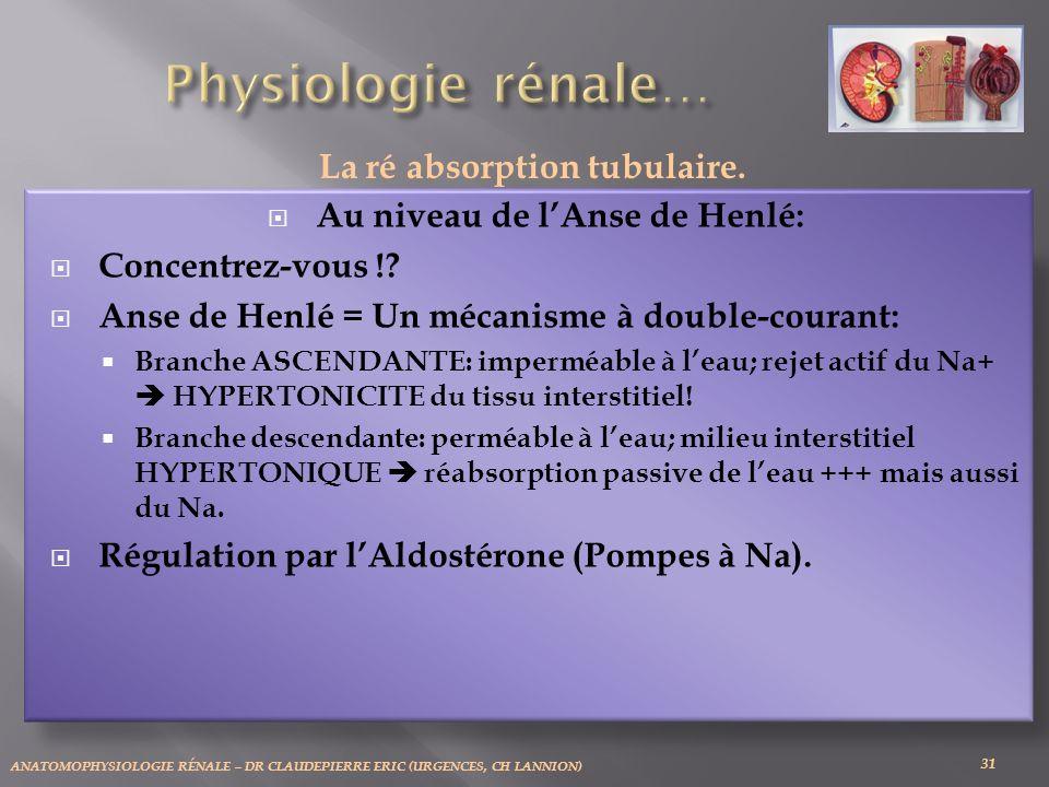 ANATOMOPHYSIOLOGIE RÉNALE – DR CLAUDEPIERRE ERIC (URGENCES, CH LANNION) 31 La ré absorption tubulaire.