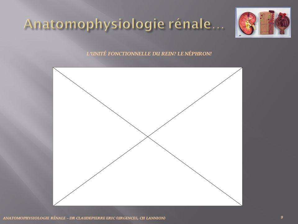ANATOMOPHYSIOLOGIE RÉNALE – DR CLAUDEPIERRE ERIC (URGENCES, CH LANNION) 7: Feuillet externe ou pariétal, de la Capsule de Bowman 8: Feuillet interne ou viscéral, de la Capsule de Bowman 9: Podocytes.