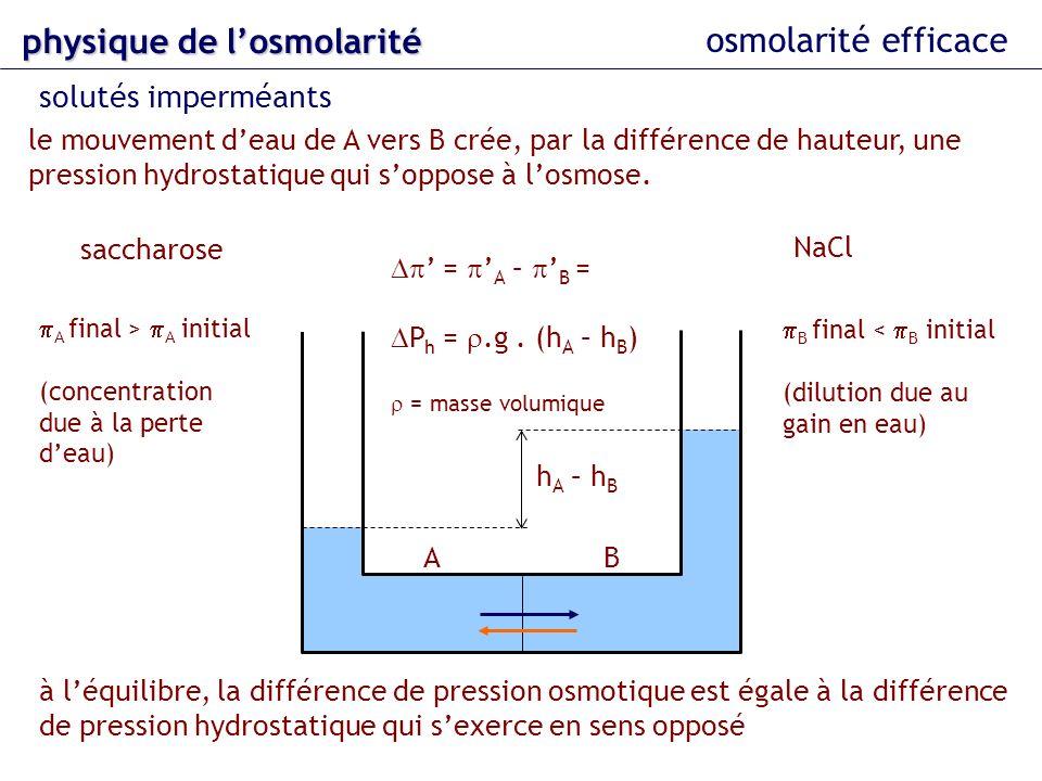osmolarité efficace solutés imperméants physique delosmolarité physique de losmolarité saccharose NaCl = A – B = P h =.g. (h A – h B ) = masse volumiq
