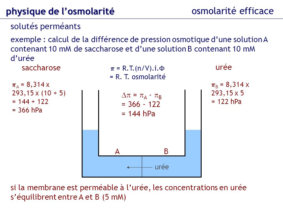 osmolarité efficace exemple : calcul de la différence de pression osmotique dune solution A contenant 10 mM de saccharose et dune solution B contenant