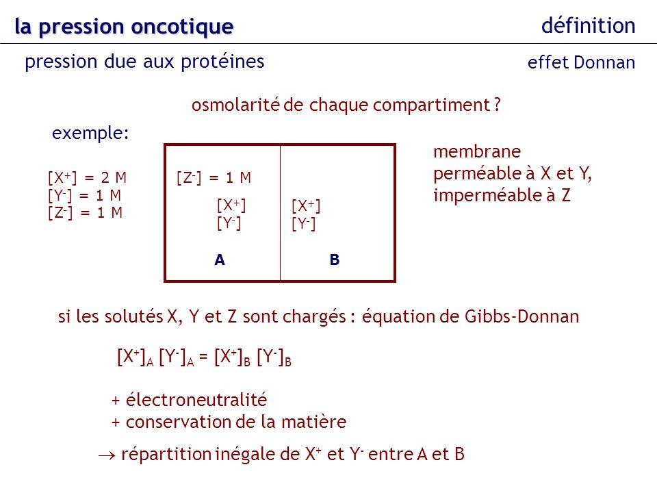 la pression oncotique définition pression due aux protéines AB [Z - ] = 1 M [X + ] [Y - ] [X + ] = 2 M [Y - ] = 1 M [Z - ] = 1 M [X + ] [Y - ] exemple