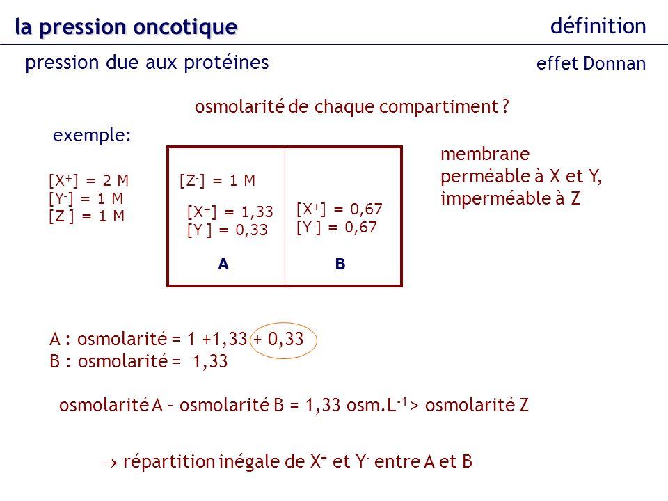 la pression oncotique définition pression due aux protéines AB [Z - ] = 1 M [X + ] = 0,67 [Y - ] = 0,67 [X + ] = 2 M [Y - ] = 1 M [Z - ] = 1 M [X + ]