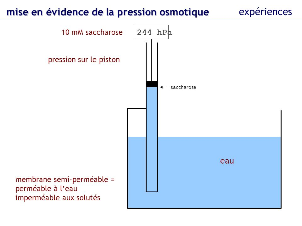 eau 10 mM saccharose membrane semi-perméable = perméable à leau imperméable aux solutés pression sur le piston saccharose 244 hPa mise en évidence del