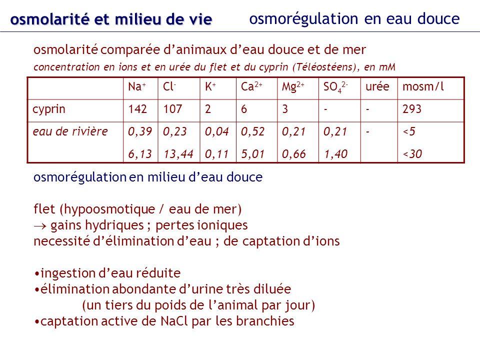 Na + Cl - K+K+ Ca 2+ Mg 2+ SO 4 2- uréemosm/l cyprin142107263--293 eau de rivière 0,39 6,13 0,23 13,44 0,04 0,11 0,52 5,01 0,21 0,66 0,21 1,40 - <5 <3
