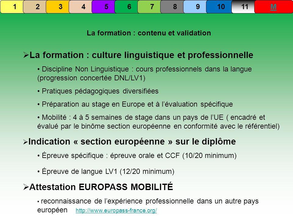 La formation : culture linguistique et professionnelle Discipline Non Linguistique : cours professionnels dans la langue (progression concertée DNL/LV