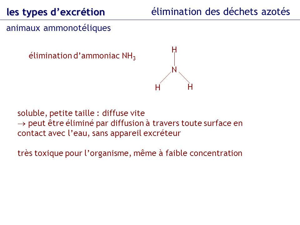les types dexcrétion élimination des déchets azotés animaux ammonotéliques élimination dammoniac NH 3 N H H H soluble, petite taille : diffuse vite pe