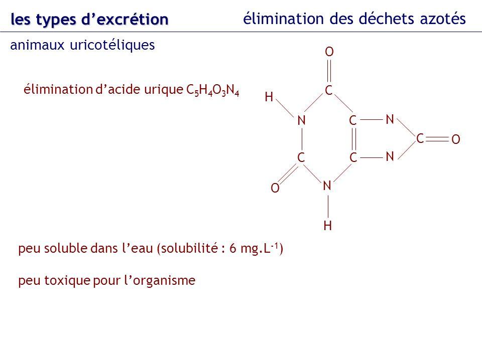 les types dexcrétion élimination des déchets azotés animaux uricotéliques élimination dacide urique C 5 H 4 O 3 N 4 N H H peu soluble dans leau (solub