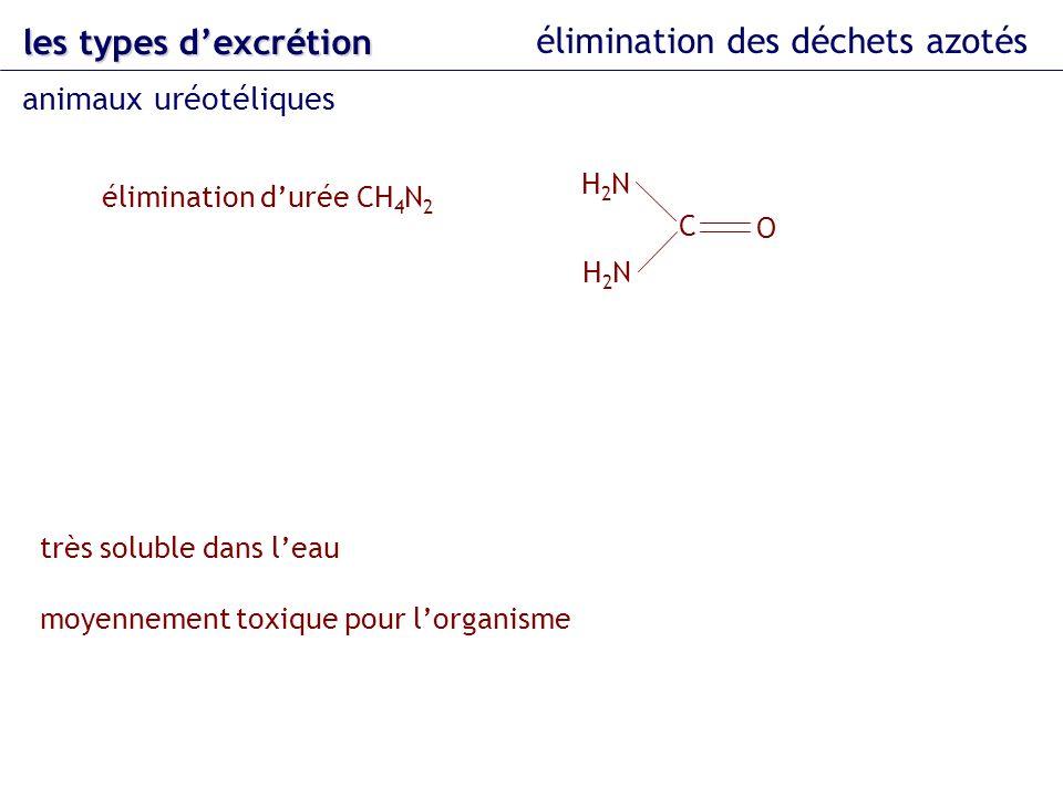 les types dexcrétion élimination des déchets azotés animaux uréotéliques élimination durée CH 4 N 2 très soluble dans leau moyennement toxique pour lo