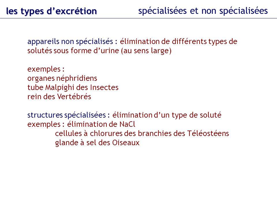 les types dexcrétion spécialisées et non spécialisées appareils non spécialisés : élimination de différents types de solutés sous forme durine (au sen