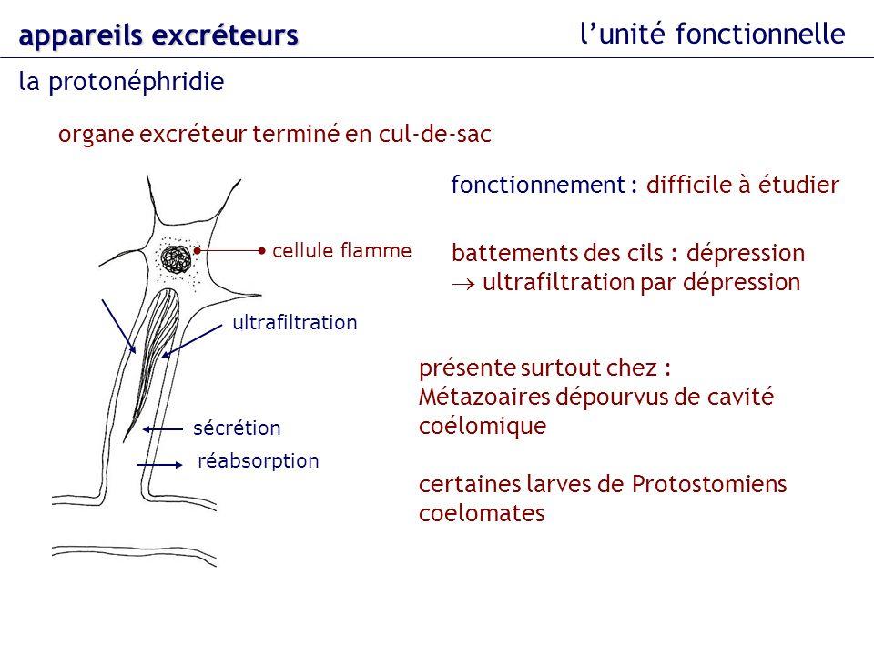 lunité fonctionnelle la protonéphridie appareils excréteurs organe excréteur terminé en cul-de-sac cellule flamme fonctionnement : difficile à étudier