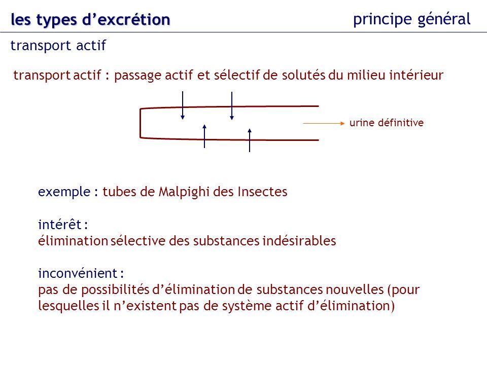 les types dexcrétion principe général transport actif : passage actif et sélectif de solutés du milieu intérieur transport actif intérêt : élimination