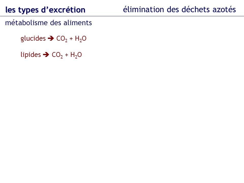 les types dexcrétion élimination des déchets azotés métabolisme des aliments protéines CO 2 + H 2 O + NH 3 urée acide urique acides nucléiques purines acide urique allantoïne acide allantoïque urée NH 3 pyrimidines acides aminés NH 3 urée acide urique