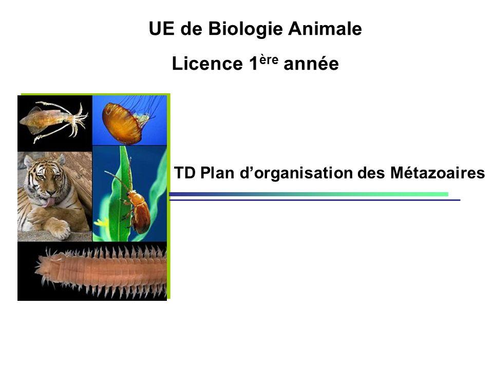 TD Plan dorganisation des Métazoaires UE de Biologie Animale Licence 1 ère année