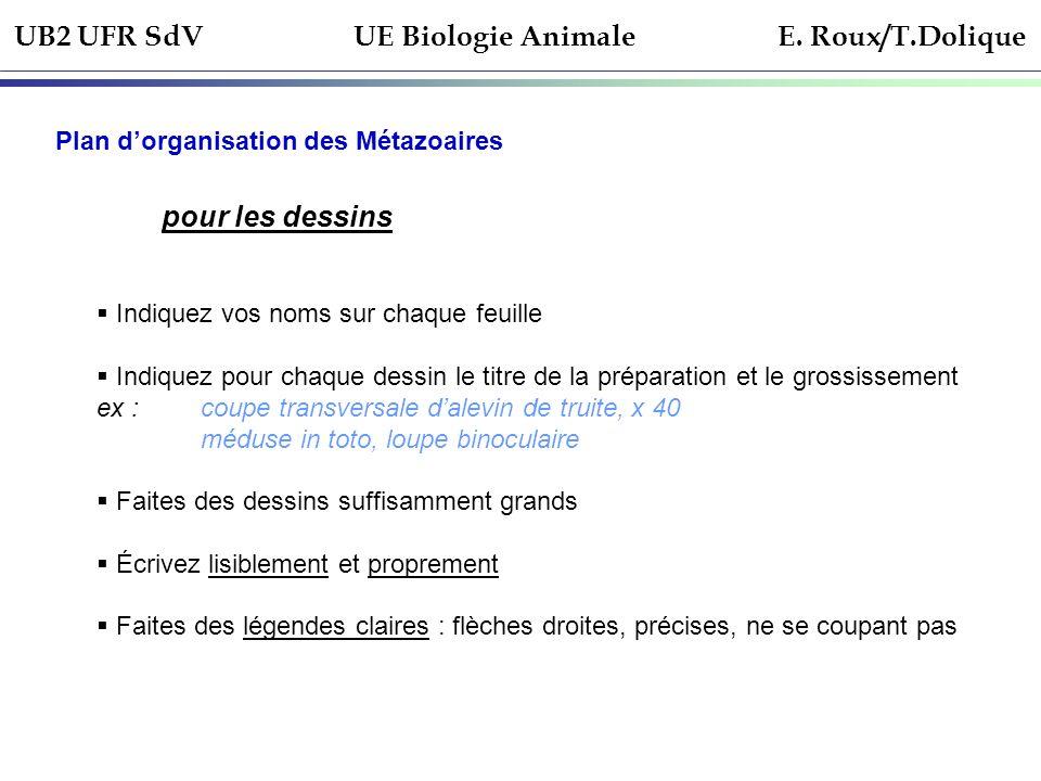 UB2 UFR SdV UE Biologie Animale E. Roux/T.Dolique Plan dorganisation des Métazoaires pour les dessins Indiquez vos noms sur chaque feuille Indiquez po