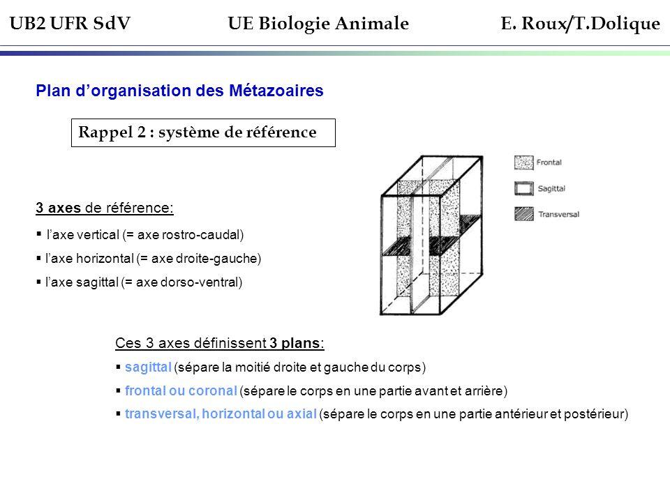 UB2 UFR SdV UE Biologie Animale E. Roux/T.Dolique Plan dorganisation des Métazoaires Rappel 2 : système de référence 3 axes de référence: laxe vertica
