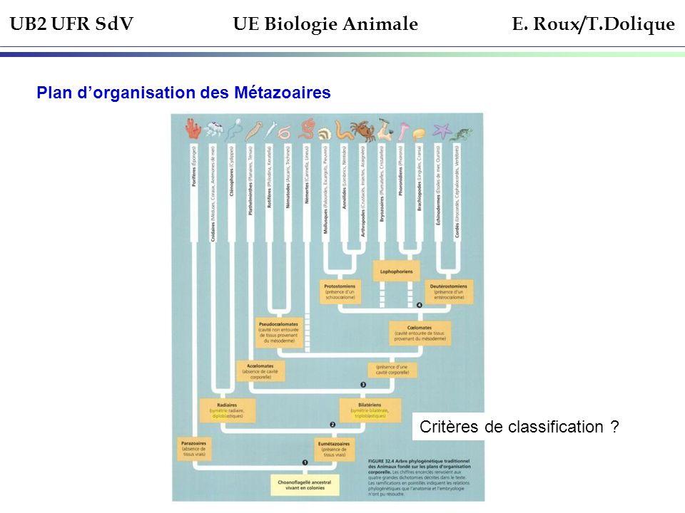 UB2 UFR SdV UE Biologie Animale E. Roux/T.Dolique Plan dorganisation des Métazoaires Critères de classification ?