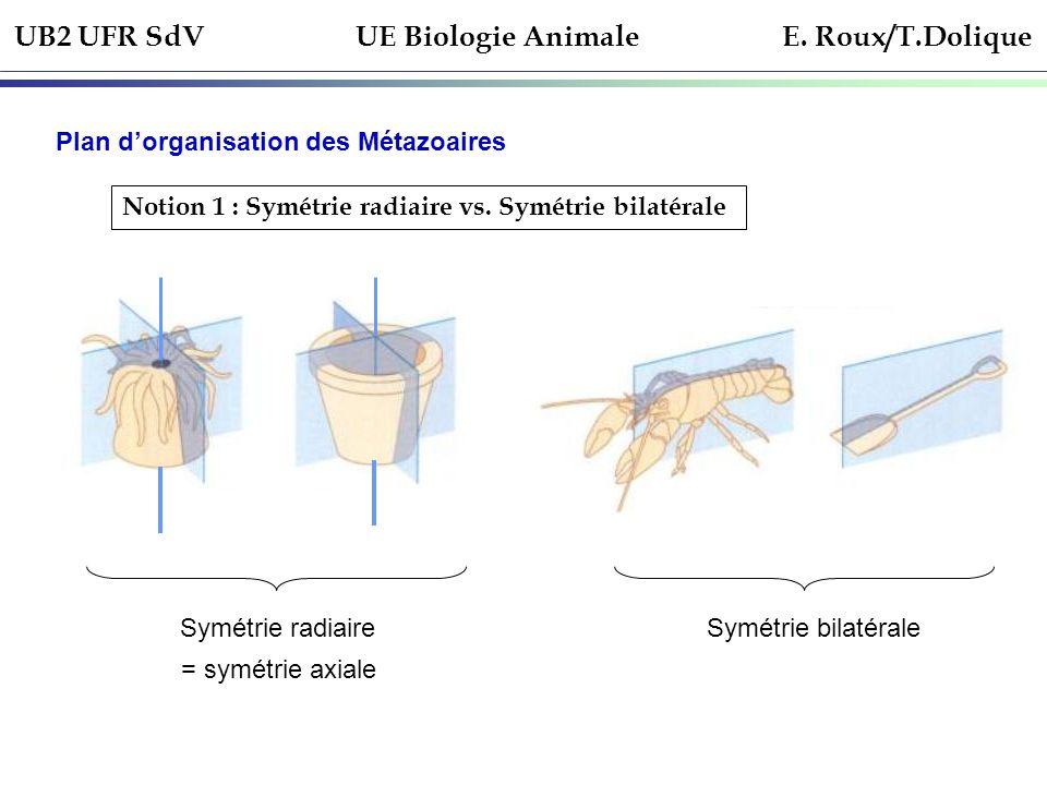 UB2 UFR SdV UE Biologie Animale E. Roux/T.Dolique Plan dorganisation des Métazoaires Notion 1 : Symétrie radiaire vs. Symétrie bilatérale Symétrie rad