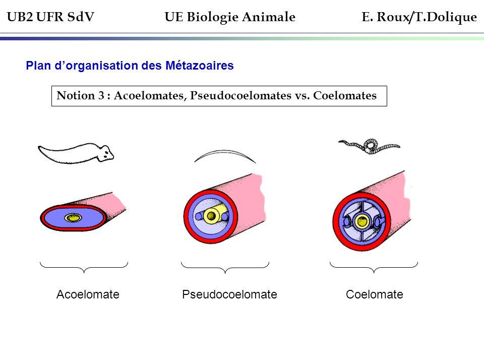 UB2 UFR SdV UE Biologie Animale E. Roux/T.Dolique Plan dorganisation des Métazoaires Notion 3 : Acoelomates, Pseudocoelomates vs. Coelomates Acoelomat