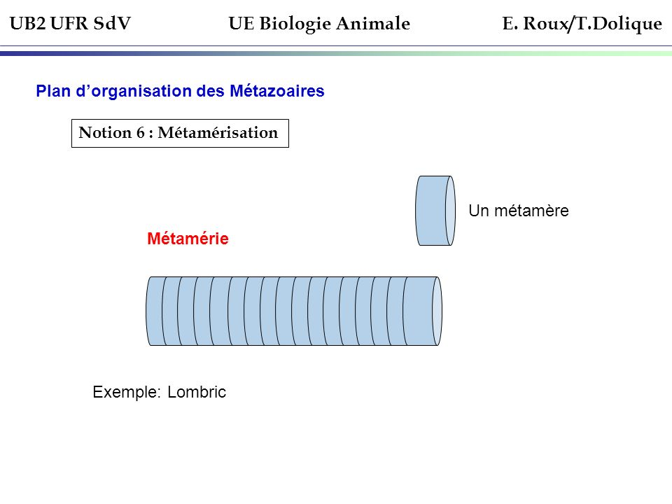 UB2 UFR SdV UE Biologie Animale E. Roux/T.Dolique Plan dorganisation des Métazoaires Notion 6 : Métamérisation Métamérie Un métamère Exemple: Lombric