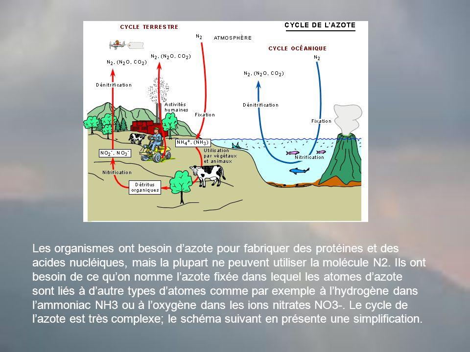 Les organismes ont besoin dazote pour fabriquer des protéines et des acides nucléiques, mais la plupart ne peuvent utiliser la molécule N2.