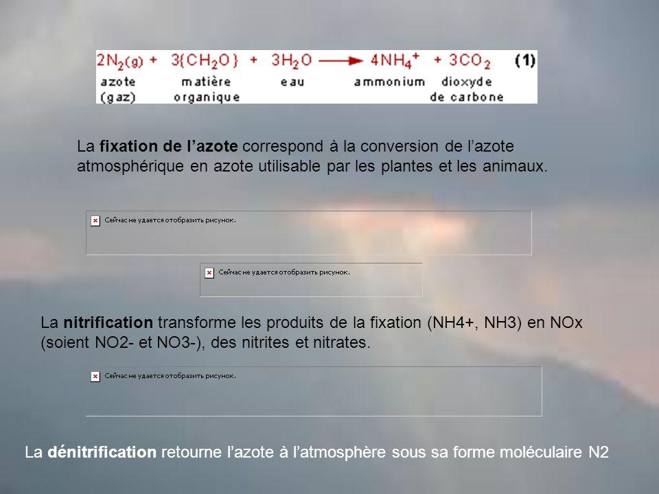 La dénitrification retourne lazote à latmosphère sous sa forme moléculaire N2 La nitrification transforme les produits de la fixation (NH4+, NH3) en NOx (soient NO2- et NO3-), des nitrites et nitrates.