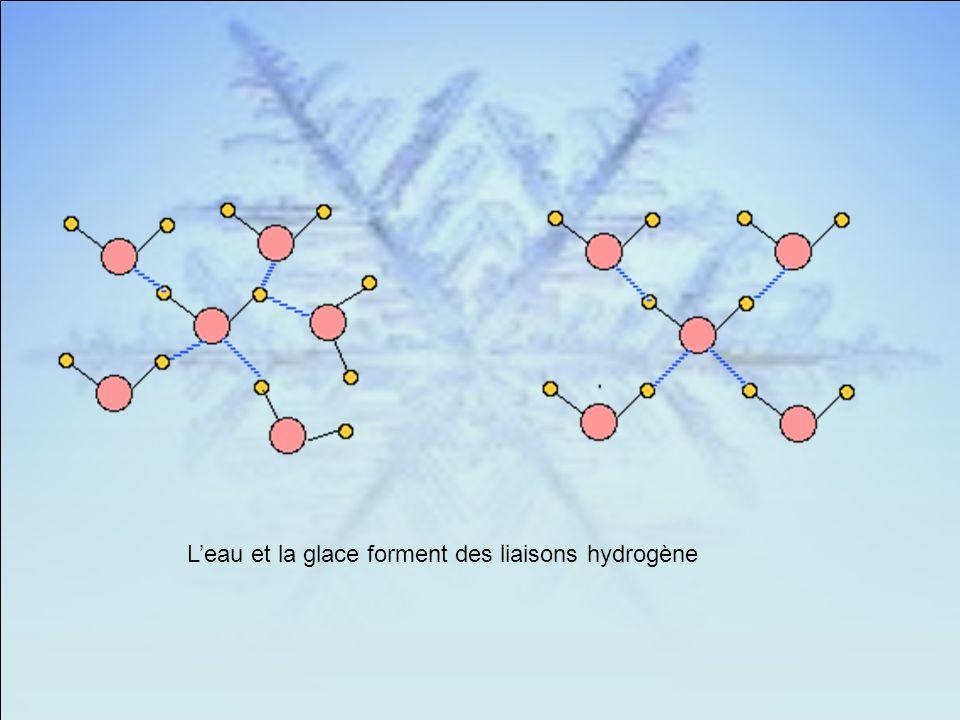 Leau et la glace forment des liaisons hydrogène