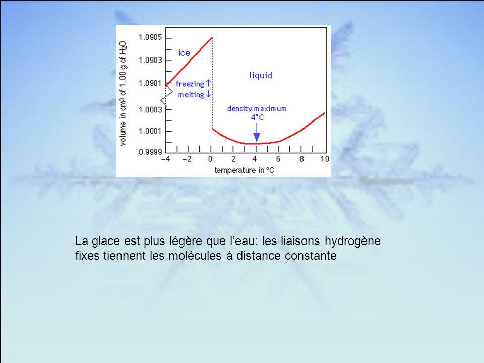 La glace est plus légère que leau: les liaisons hydrogène fixes tiennent les molécules à distance constante
