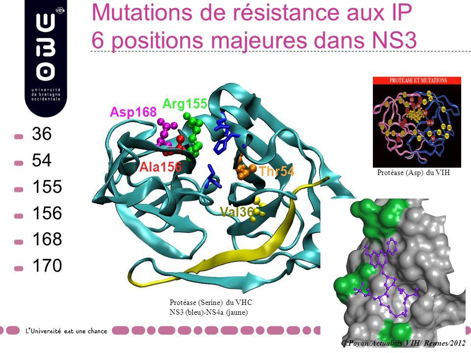 Mutations de résistance aux IP 6 positions majeures dans NS3 36 54 155 156 168 170 Asp168 Ala156 Arg155 Thr54 Val36 Protéase (Asp) du VIH Protéase (Se