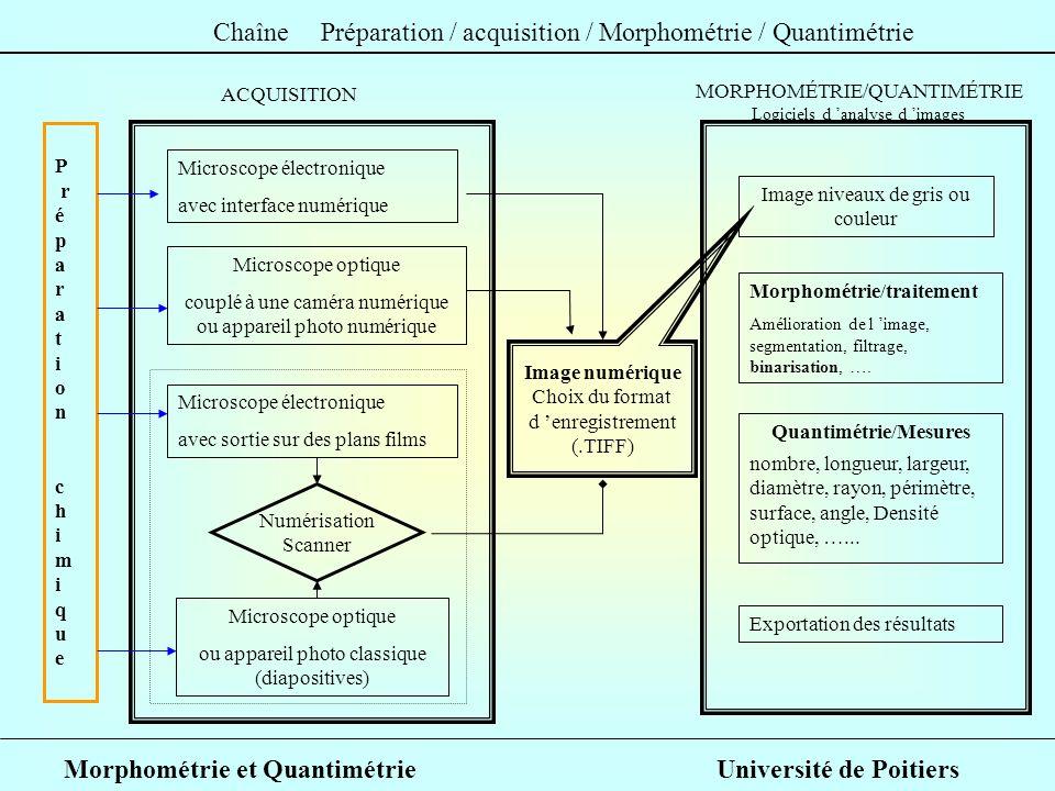 Morphométrie et Quantimétrie Université de Poitiers P r é p a r a t i o n c h i m i q u e Image numérique Choix du format d enregistrement (.TIFF) Mic