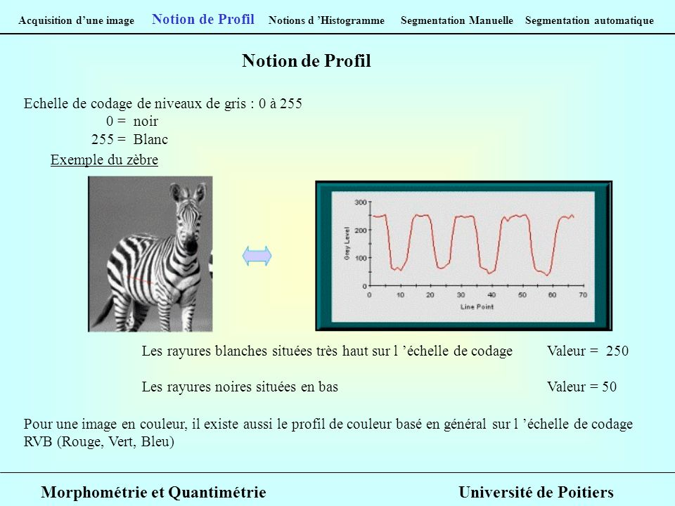 Acquisition dune image Notion de Profil Notions d Histogramme Segmentation Manuelle Segmentation automatique Notion de Profil Echelle de codage de niv