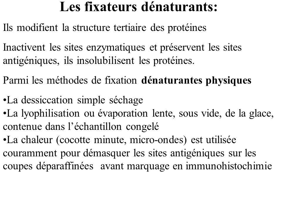 Les fixateurs dénaturants: Ils modifient la structure tertiaire des protéines Inactivent les sites enzymatiques et préservent les sites antigéniques,