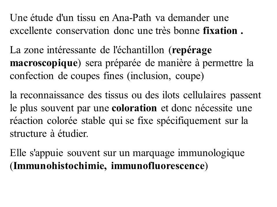 Une étude d'un tissu en Ana-Path va demander une excellente conservation donc une très bonne fixation. La zone intéressante de l'échantillon (repérage