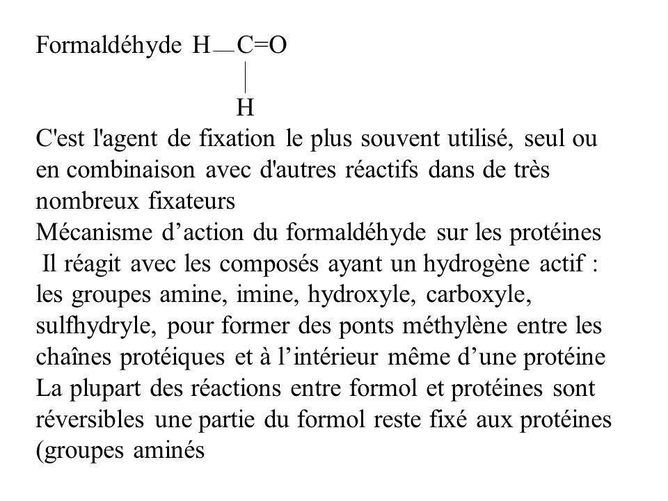 Formaldéhyde H C=O H C'est l'agent de fixation le plus souvent utilisé, seul ou en combinaison avec d'autres réactifs dans de très nombreux fixateurs