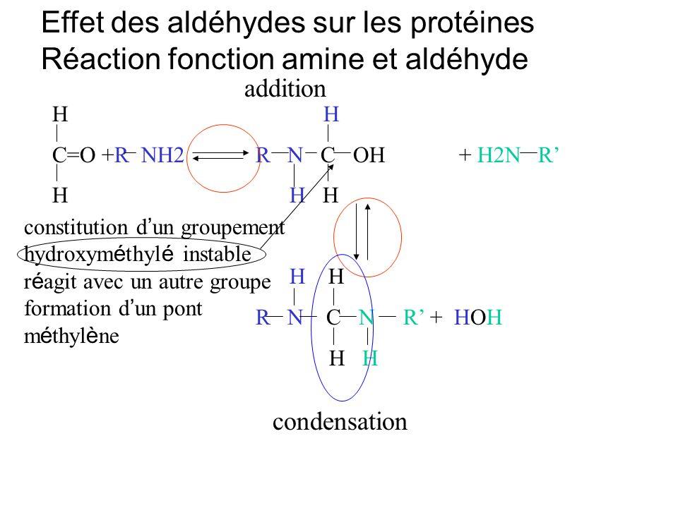 H C=O +R NH2R N C OH+ H2N R H H H H H R N C N R + HOH H H Effet des aldéhydes sur les protéines Réaction fonction amine et aldéhyde addition condensat