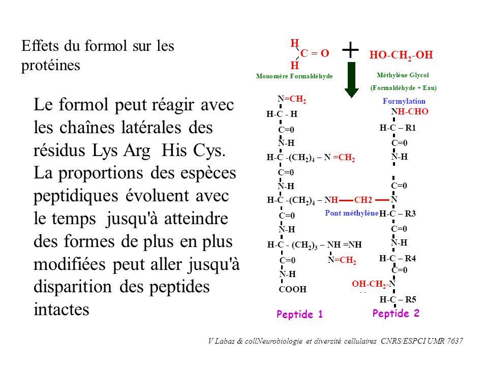 Effets du formol sur les protéines V Labas & collNeurobiologie et diversité cellulaires CNRS/ESPCI UMR 7637 Le formol peut réagir avec les chaînes lat