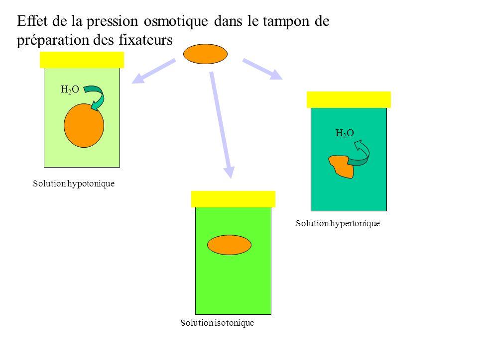 Solution hypotonique Solution hypertonique Solution isotonique Effet de la pression osmotique dans le tampon de préparation des fixateurs H2OH2O H2OH2