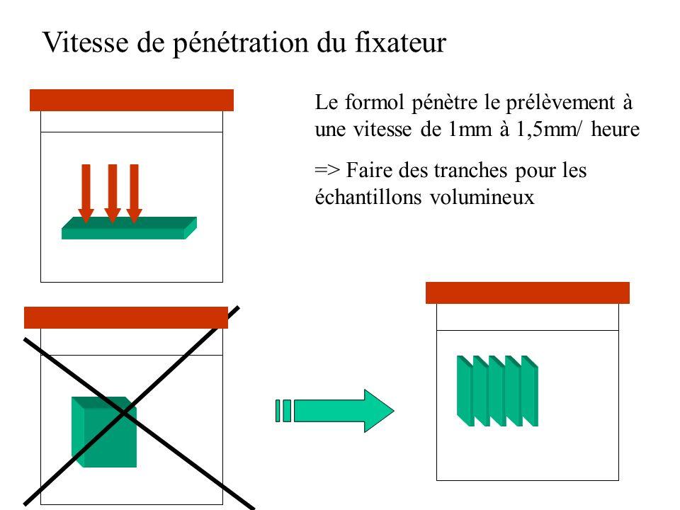 Vitesse de pénétration du fixateur Le formol pénètre le prélèvement à une vitesse de 1mm à 1,5mm/ heure => Faire des tranches pour les échantillons vo