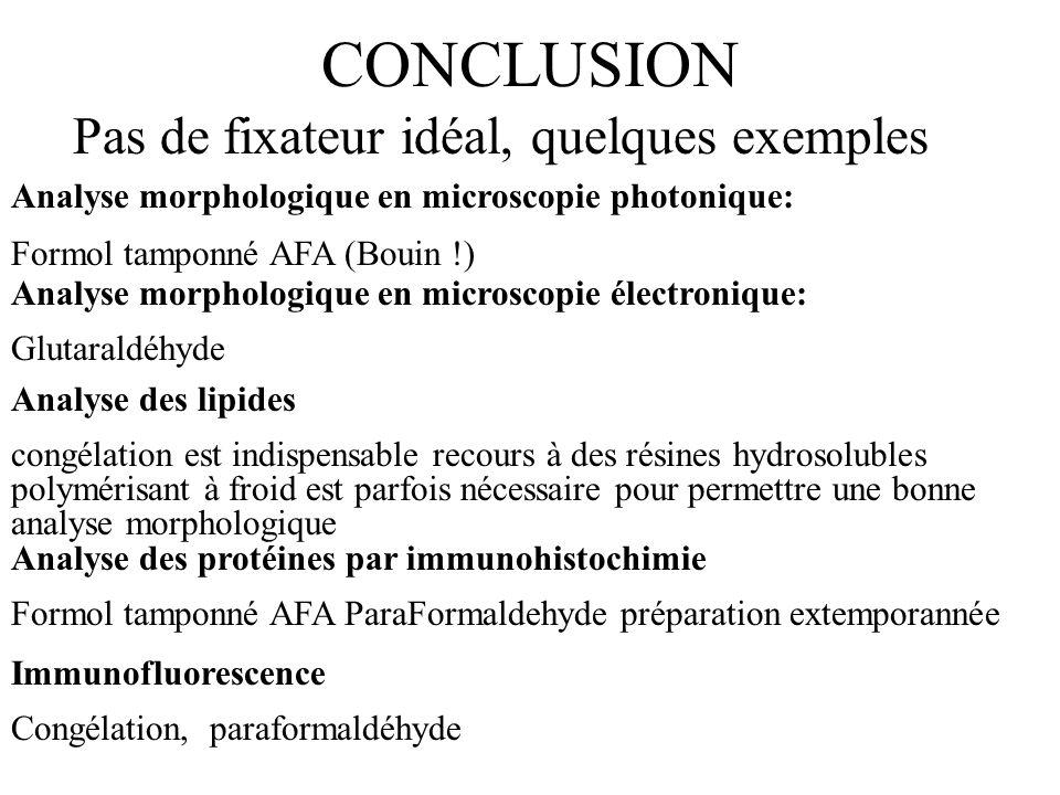 CONCLUSION Pas de fixateur idéal, quelques exemples Analyse morphologique en microscopie photonique: Formol tamponné AFA (Bouin !) Analyse morphologiq