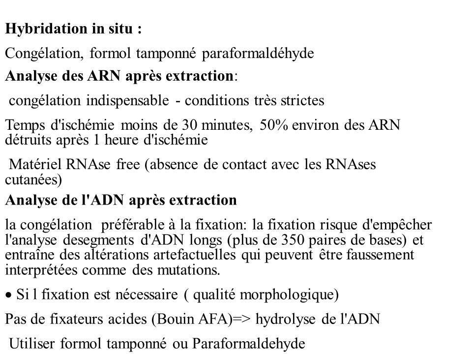 Analyse des ARN après extraction: congélation indispensable - conditions très strictes Temps d'ischémie moins de 30 minutes, 50% environ des ARN détru