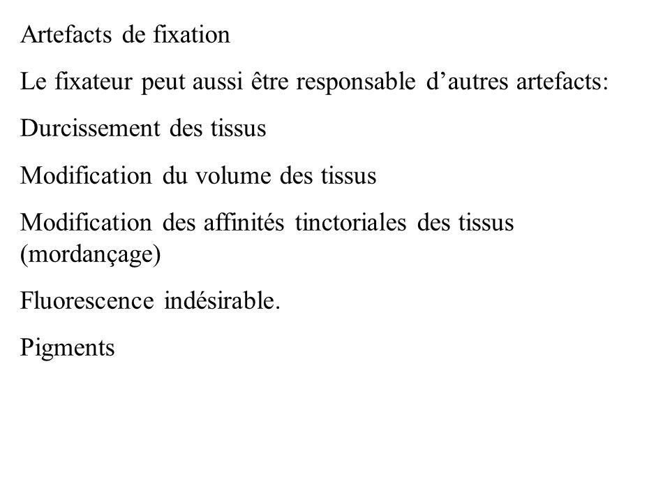 Artefacts de fixation Le fixateur peut aussi être responsable dautres artefacts: Durcissement des tissus Modification du volume des tissus Modificatio