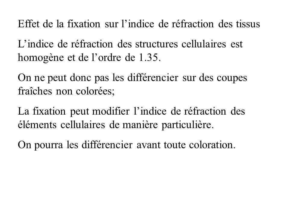 Effet de la fixation sur lindice de réfraction des tissus Lindice de réfraction des structures cellulaires est homogène et de lordre de 1.35. On ne pe