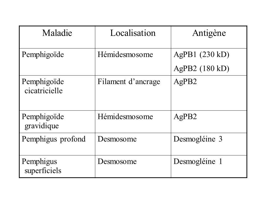 MaladieLocalisationAntigène PemphigoïdeHémidesmosome AgPB1 (230 kD) AgPB2 (180 kD) Pemphigoïde cicatricielle Filament dancrageAgPB2 Pemphigoïde gravid