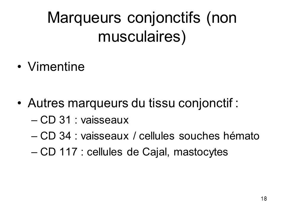18 Marqueurs conjonctifs (non musculaires) Vimentine Autres marqueurs du tissu conjonctif : –CD 31 : vaisseaux –CD 34 : vaisseaux / cellules souches h