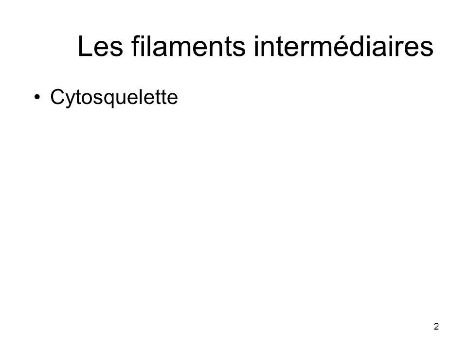2 Les filaments intermédiaires Cytosquelette